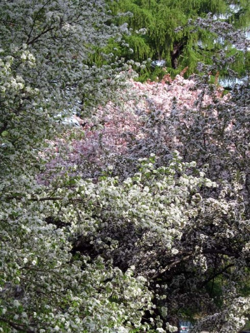 arboretum.jpg