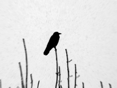crow-in-snow