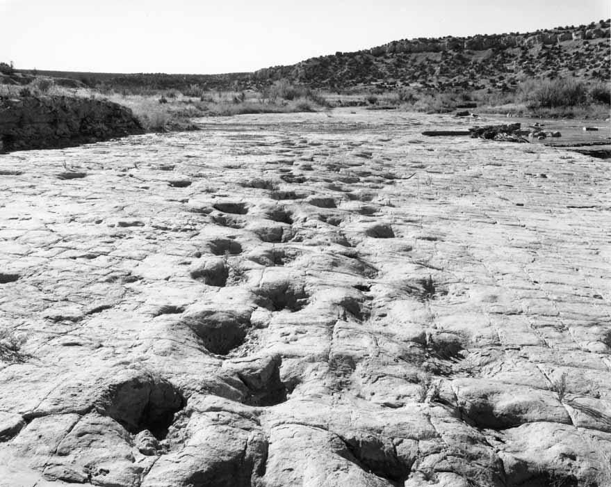 dinosaur tracks along the